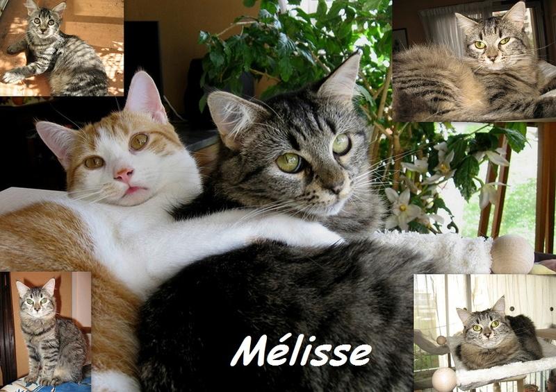 MELISSE, chat femelle Nouvea16