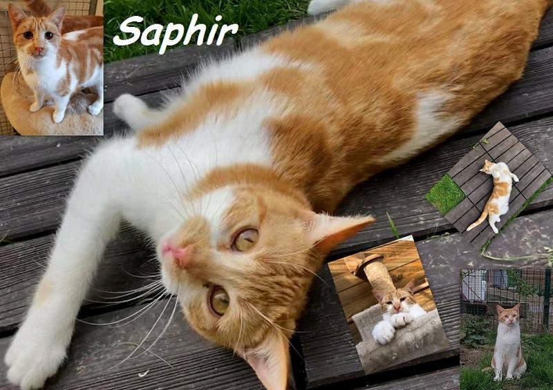 SAPHIR : annonces types pr sites gratuits Nouvea25