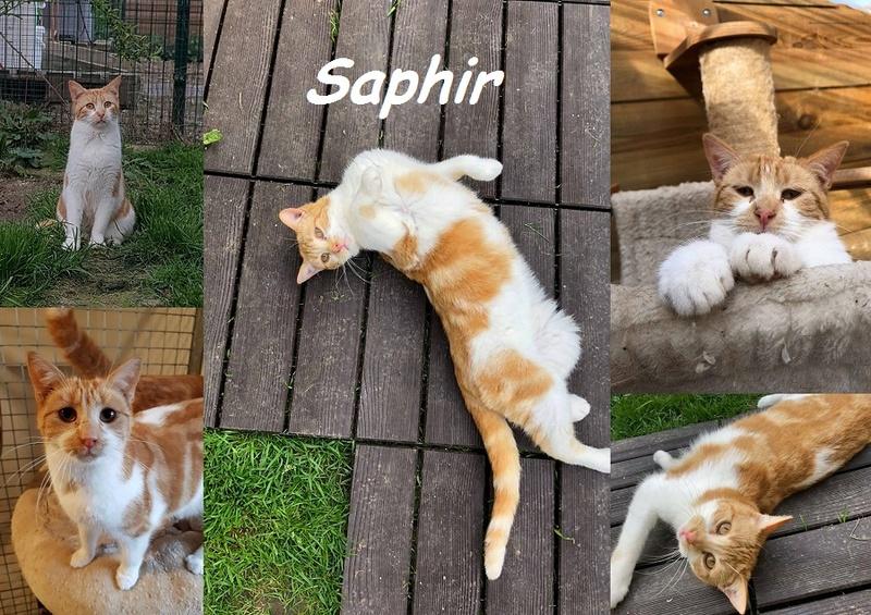 SAPHIR, chat mâle Nouvea28
