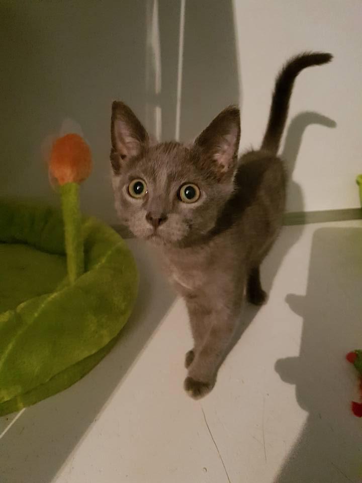 DOBBY chaton trouvé peu avant Noël ! Santa110