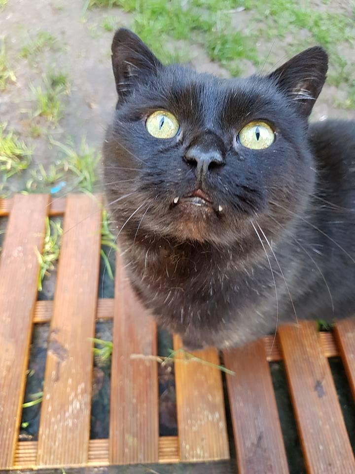 SOREN, 8 ans, câlinou FIV à adopter sans chat (27) - Page 2 Soren411