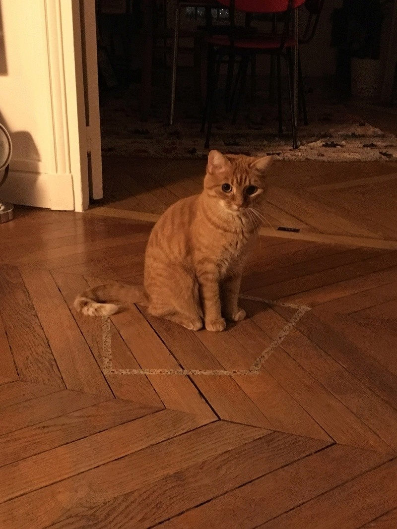 SUNNY retour d'adoption... Sunny310