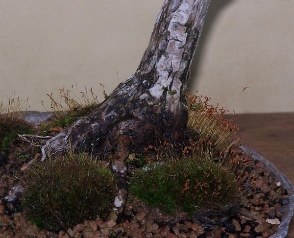 Has anyone else trid ButtonBUSH (Cephalanthus occidentalis) 5-10_b10