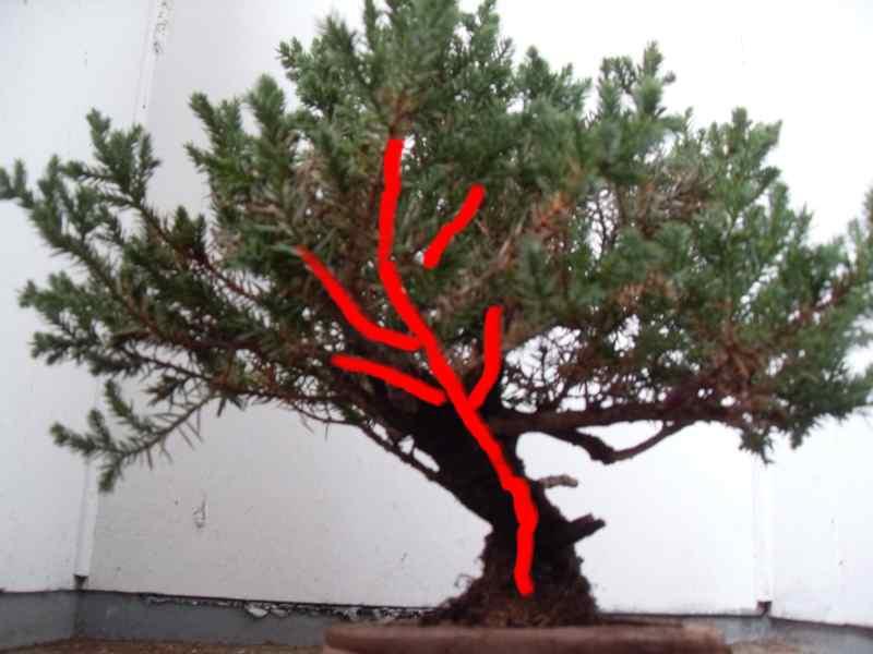 Styling help please (san jose juniper) Jun12