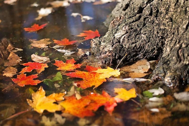 l'automne - Page 3 Autumn12