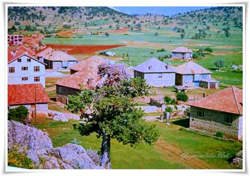 Mazide kalan leylek ağacı-Göynem 1991 Goynem12