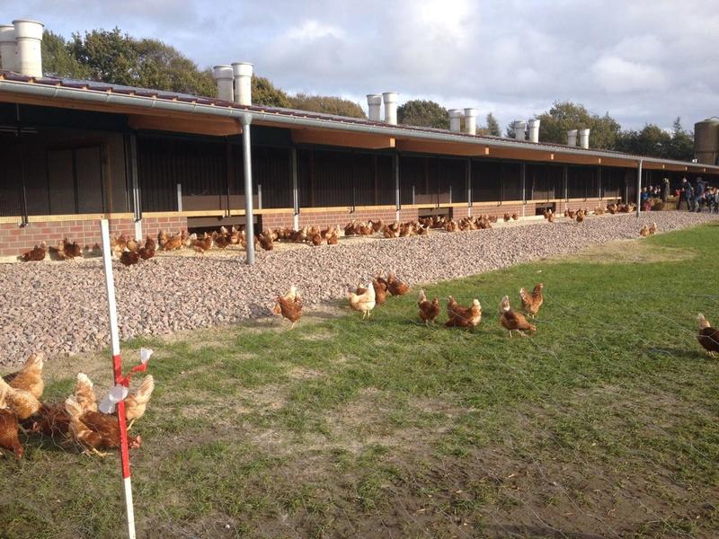 Industrielle Hühnerhaltung 110