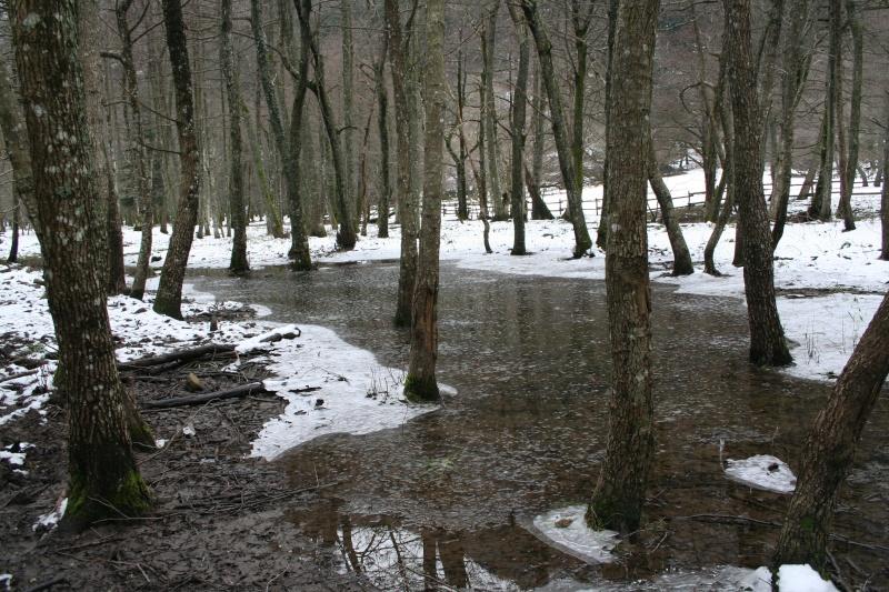 Ruscelli e cascate della foresta della Lama (31/01/09) 31-01-29
