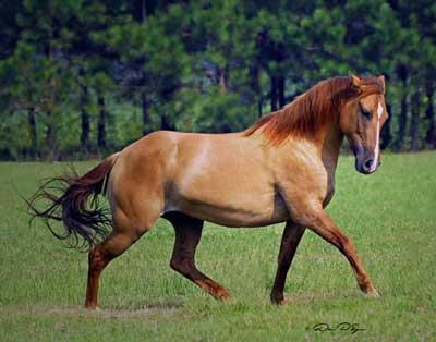 Tori's Horse Unicor20