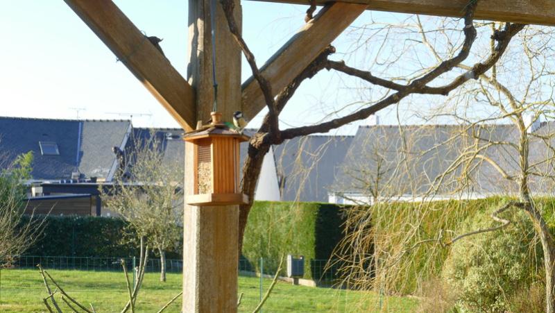 L'oiseau et l'intrus P3000412