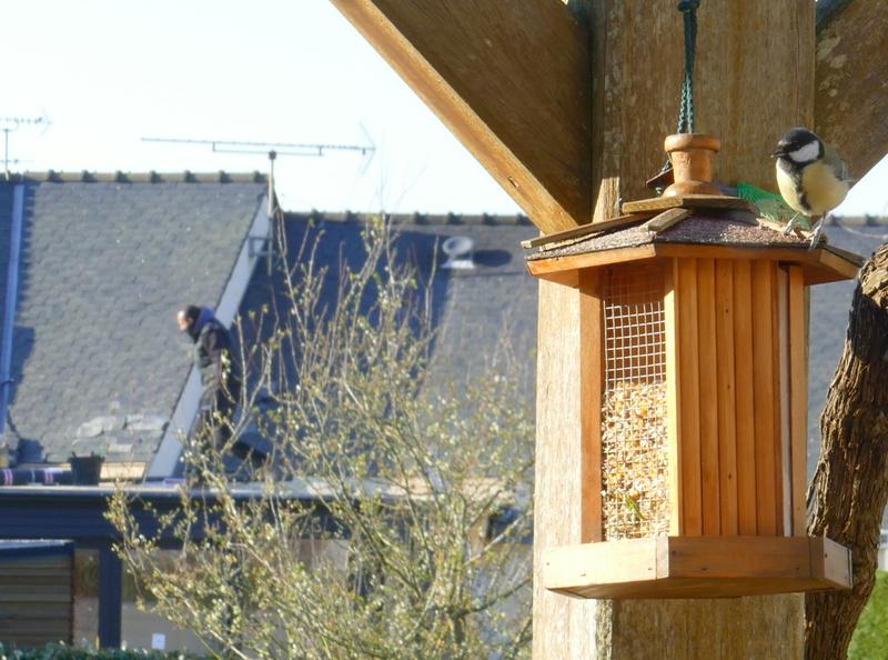 L'oiseau et l'intrus P3000413