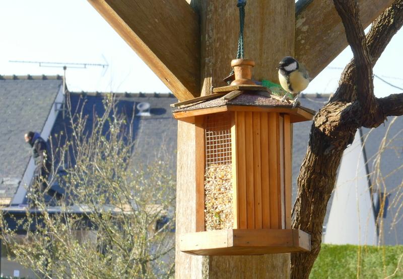L'oiseau et l'intrus P3000414