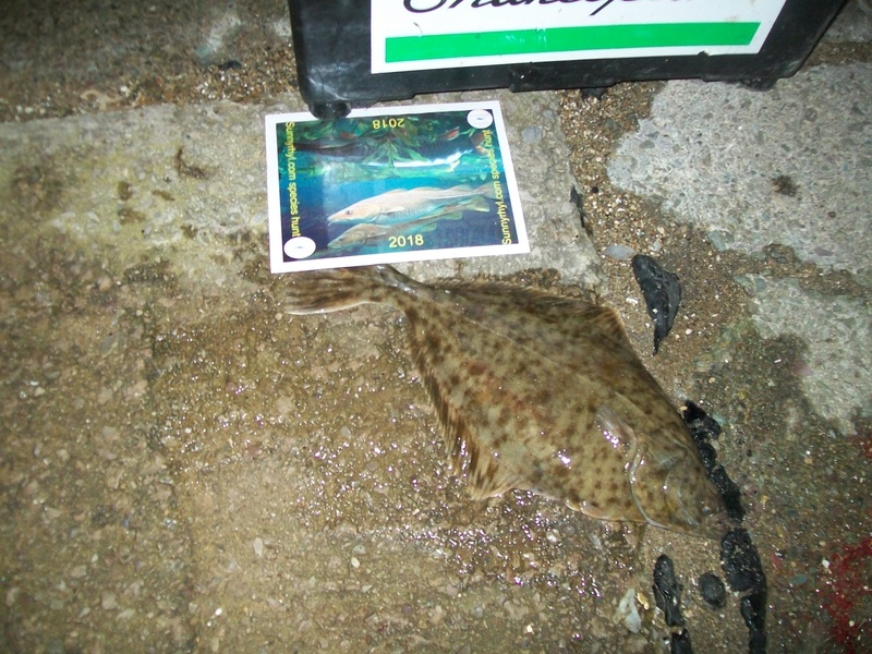 Kevs Flounder 100_1920