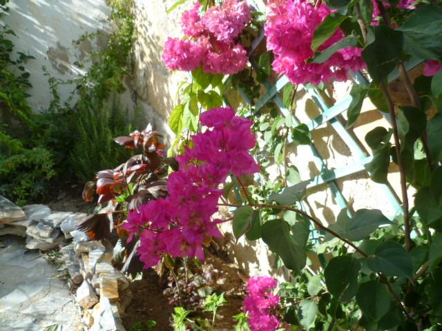dernières fleurettes de l'année 1-p10121