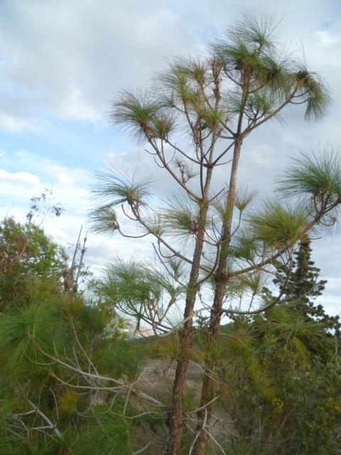 Espagne - flore de la région d'Alicante 1-p10123