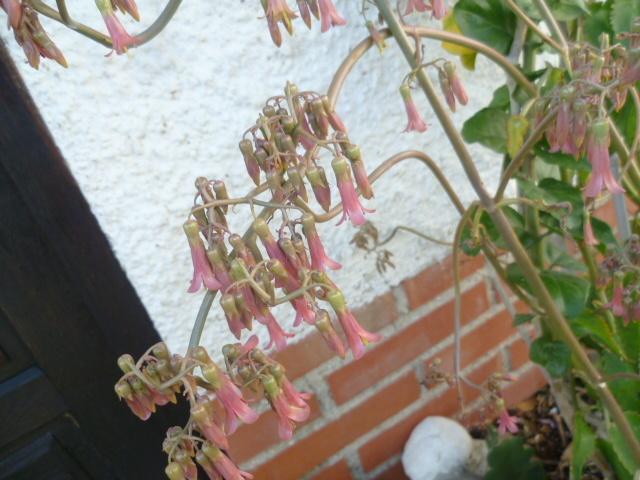 couleurs d'hiver au jardin  1-p10215