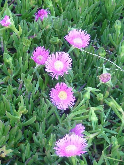 explosion florale 1-p10294