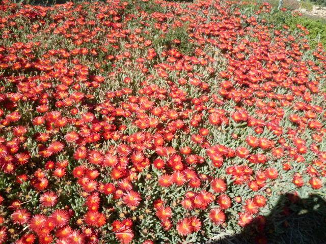 explosion florale 1-p10295