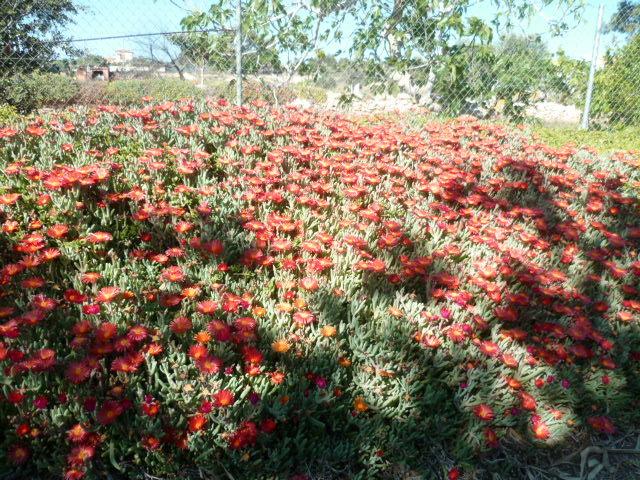 explosion florale 1-p10296