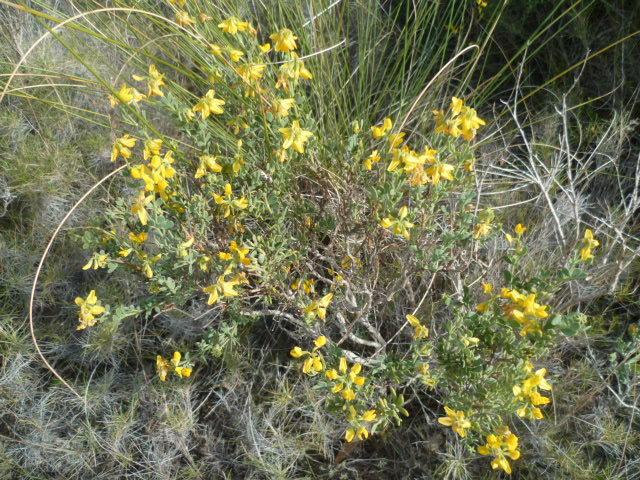 Espagne - flore de la région d'Alicante 1-p10304