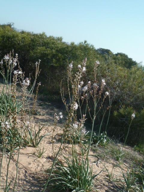 Espagne - flore de la région d'Alicante - Page 2 1-p10314