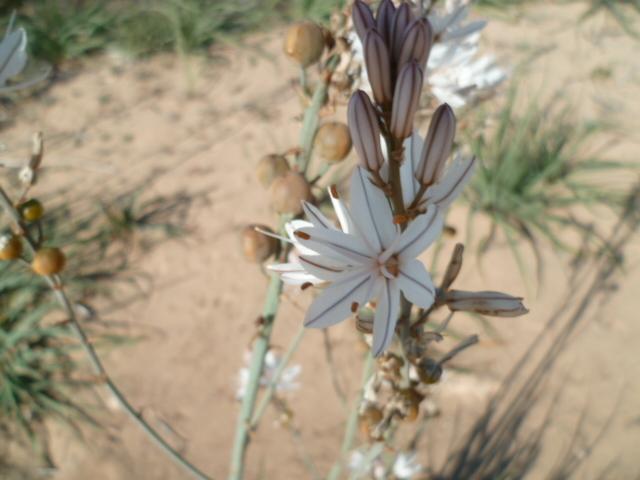 Espagne - flore de la région d'Alicante - Page 2 1-p10315