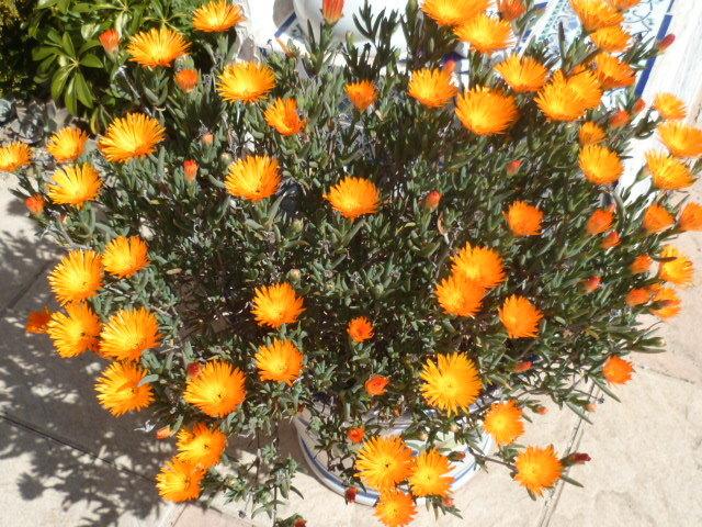 explosion florale - Page 2 1-p10326