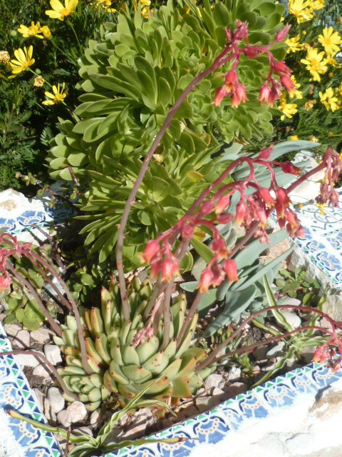 explosion florale - Page 2 1-p10328