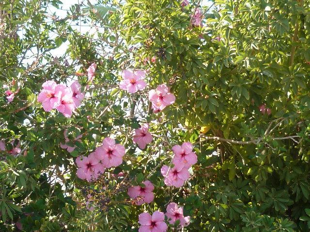 les jardins sont beaux en mai ! - Page 3 1-p10814