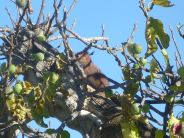 écureuil en visite journaliere 1-p10993