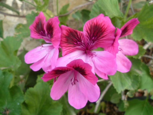 explosion florale - Page 3 P1100016