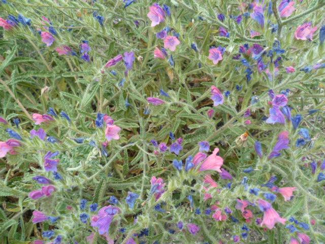Espagne - flore de la région d'Alicante - Page 2 P1100110