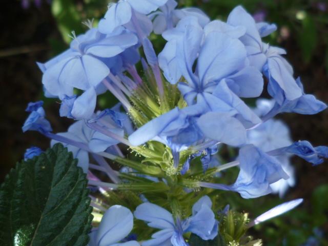 les jardins sont beaux en mai ! P1100126