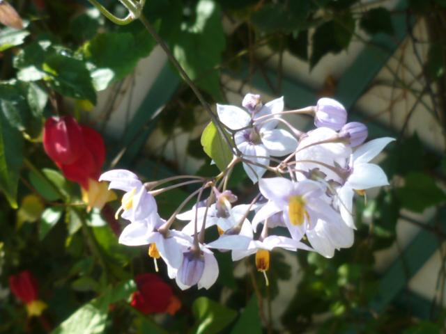 les jardins sont beaux en mai ! P1100135
