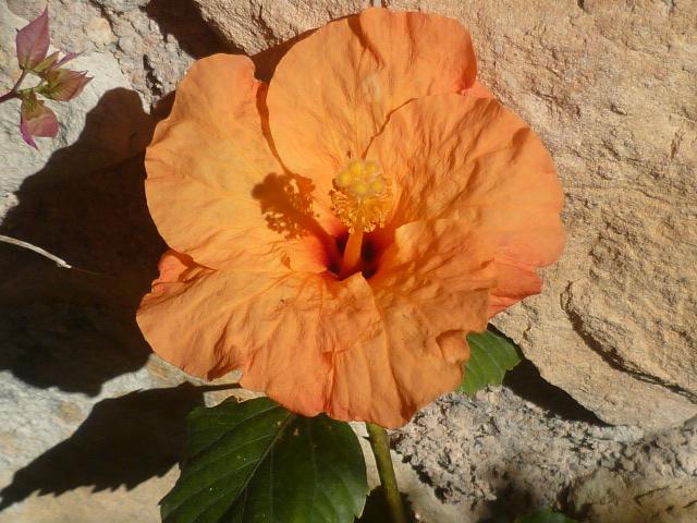 les jardins sont beaux en mai ! - Page 3 P1100228