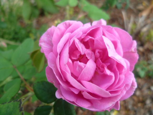 les jardins sont beaux en mai ! - Page 6 P1100334