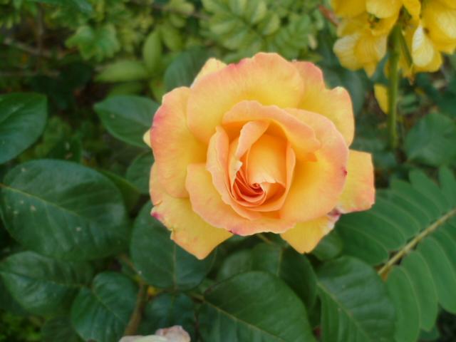 les jardins sont beaux en mai ! - Page 6 P1100335