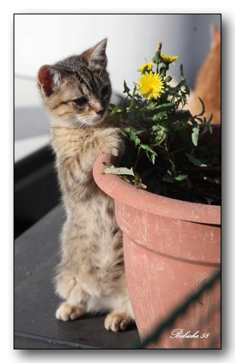 Je vous offre une fleur  Num10