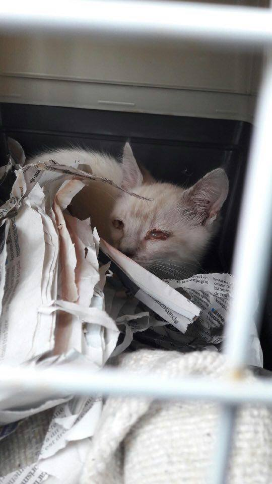 Photos des chats sauvés, avant/après - Page 9 Charli10