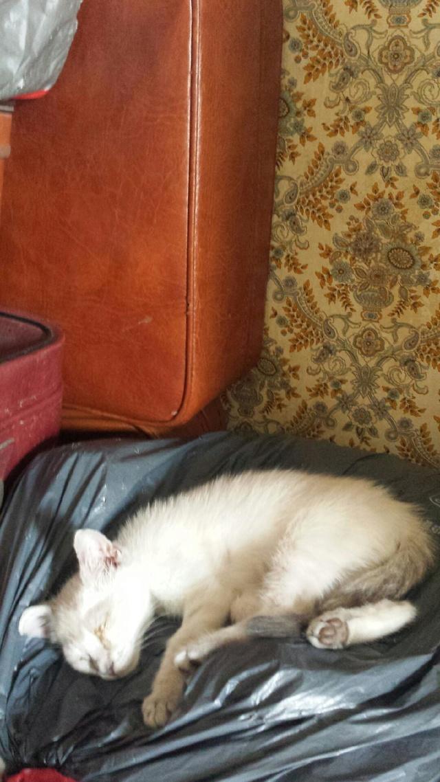 Photos des chats sauvés, avant/après - Page 9 Charli11