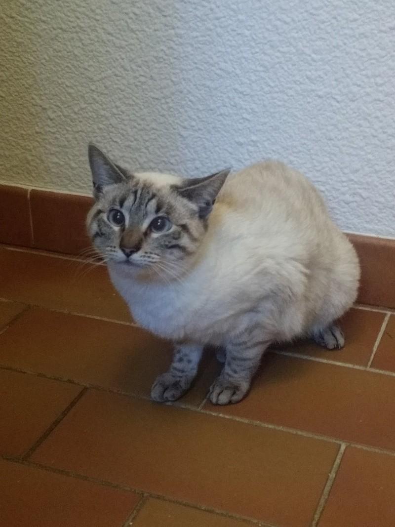 Photos des chats sauvés, avant/après - Page 9 Ginett10