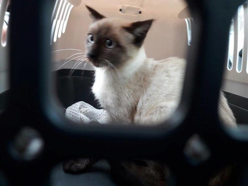 Photos des chats sauvés, avant/après - Page 9 Goma10