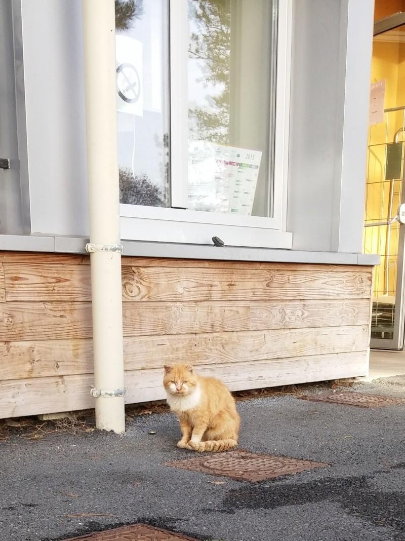 Photos des chats sauvés, avant/après - Page 9 Oscar-10