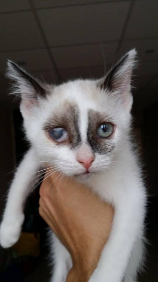 Photos des chats sauvés, avant/après - Page 9 Pouill10