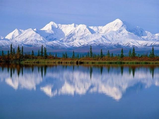 Miel de pissenlit Alaska10