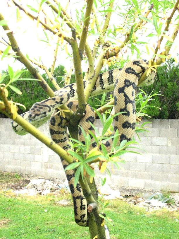 Mes jaguar !! Photo_20