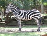 Quiz2.. Selagi Aku Lagi Isenk.. Simple2 aja.. Zebra10