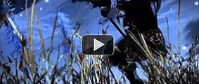 Informacion Sobre El Juego Videos11