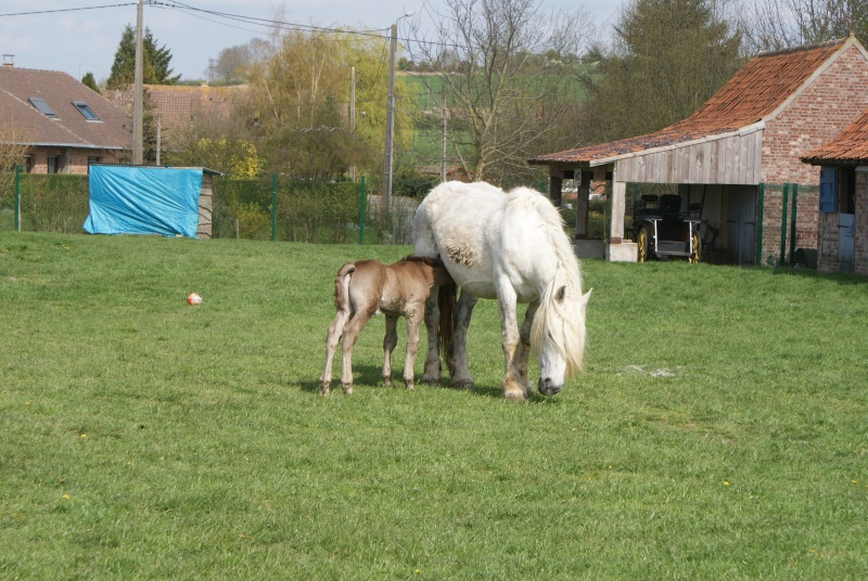 """les chevaux du centre equestre """" autre que les miens """" Dsc01217"""