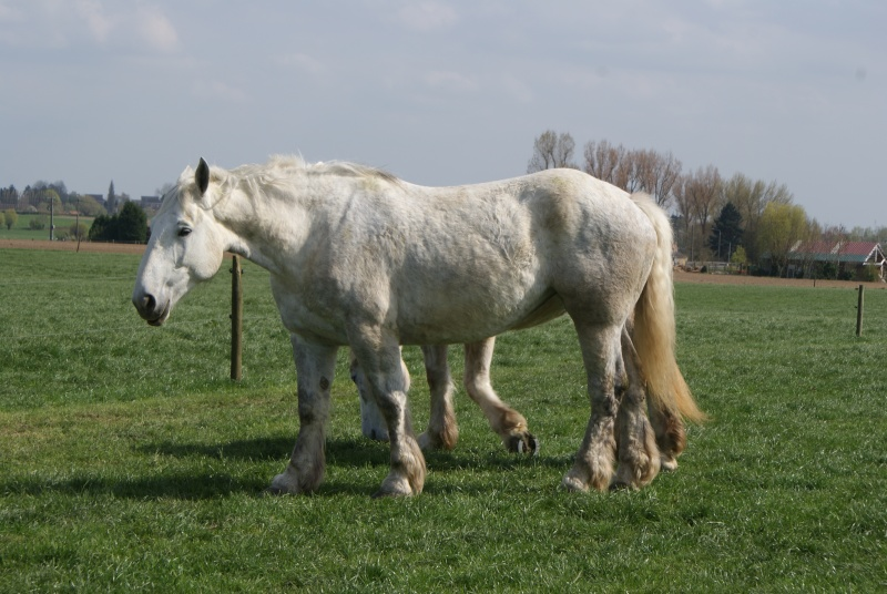 """les chevaux du centre equestre """" autre que les miens """" Dsc01218"""